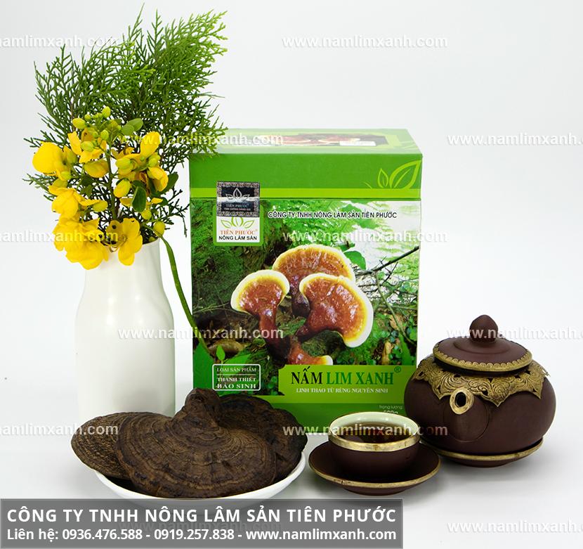 Bán nấm lim xanh tại Hà Nội và nấm lim xanh giá bao nhiêu là đúng chuẩn?