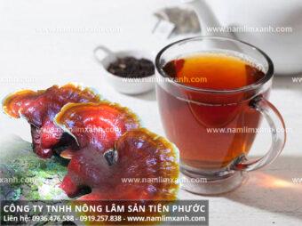 Cách nấu nước nấm lim xanh cách uống nấm lim xanh chữa bệnh