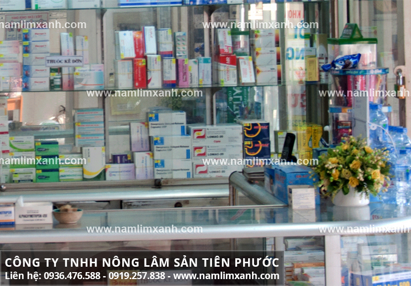 Công dụng của nấm lim tốt nên giá nấm lim xanh ở Quảng Ninh không rẻ