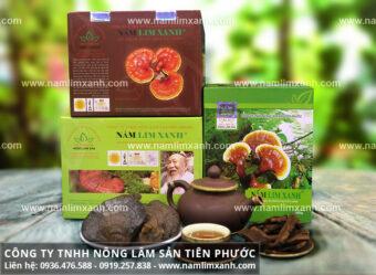 Công ty nấm lim xanh Tiên Phước với cách chế biến nấm lim xanh