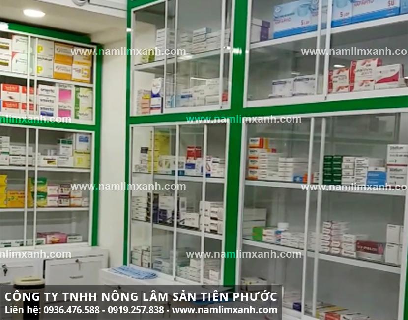 Địa chỉ bán nấm lim xanh ở Tiền Giang và tác dụng của nấm lim xanh