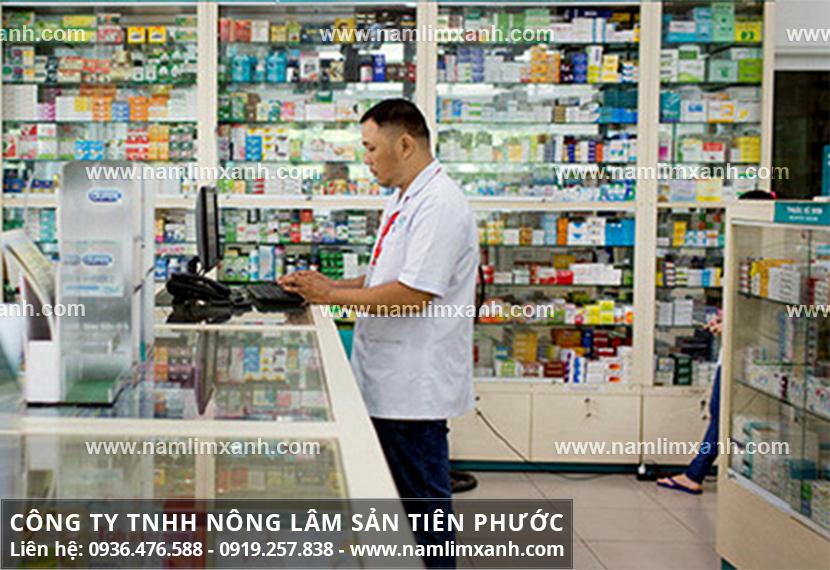 Giá mua nấm lim xanh ở Hà Nam và công dụng nấm lim rừng chữa bệnh