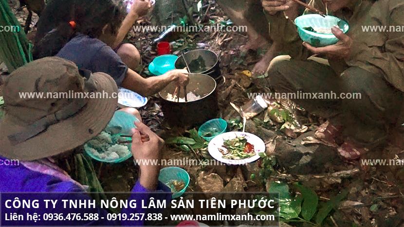 Nấm lim xanh rừng Tiên Phước với các loại cây nấm lim xanh tự nhiên