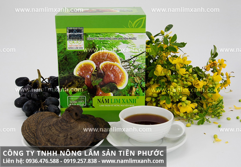 Nấm lim xanh chữa bệnh gan nhiễm mỡ và cách uống nấm lim Tiên Phước