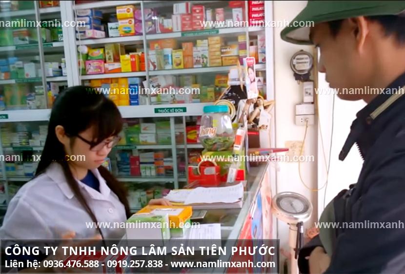 Mua nấm lim xanh tại Hà Giang và cách phân biệt nấm lim xanh rừng