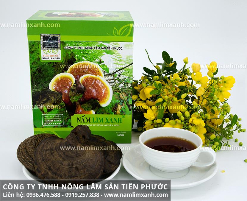 Cây nấm lim xanh rừng tự nhiên và đặc điểm hình ảnh cây nấm lim