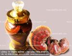 Nấm lim ngâm rượu uống ra sao tác dụng của nấm lim ngâm rượu