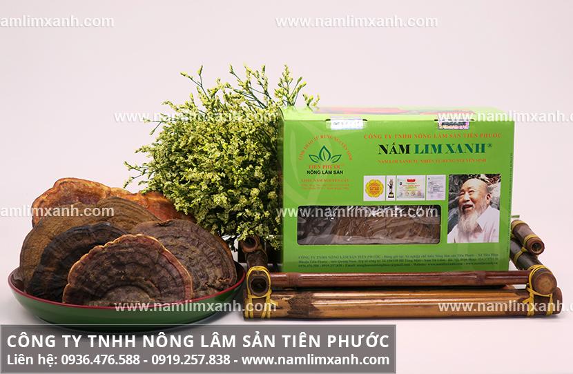 Nấm lim xanh Tiên Phước và hình ảnh cây nấm lim tự nhiên Tiên Phước