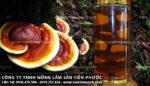 Cách ngâm rượu nấm lim xanh ngâm rượu uống có tác dụng gì tốt