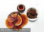 Cách sử dụng nấm lim xanh hiệu quả với cách uống nấm lim rừng?
