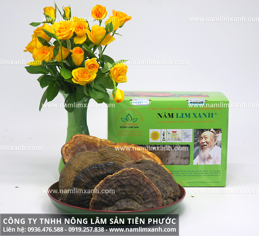 Công dụng nấm lim xanh và tác dụng dược chất của nấm lim rừng tự nhiên