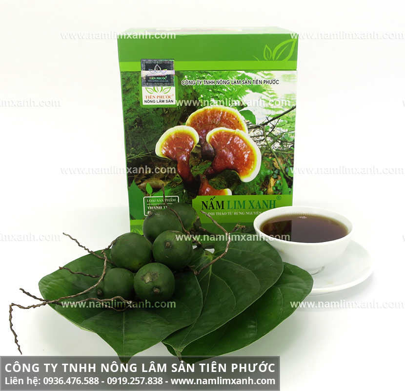 Nấm lim xanh Tiên Phước và thành phần dược chất các loại nấm lim rừng