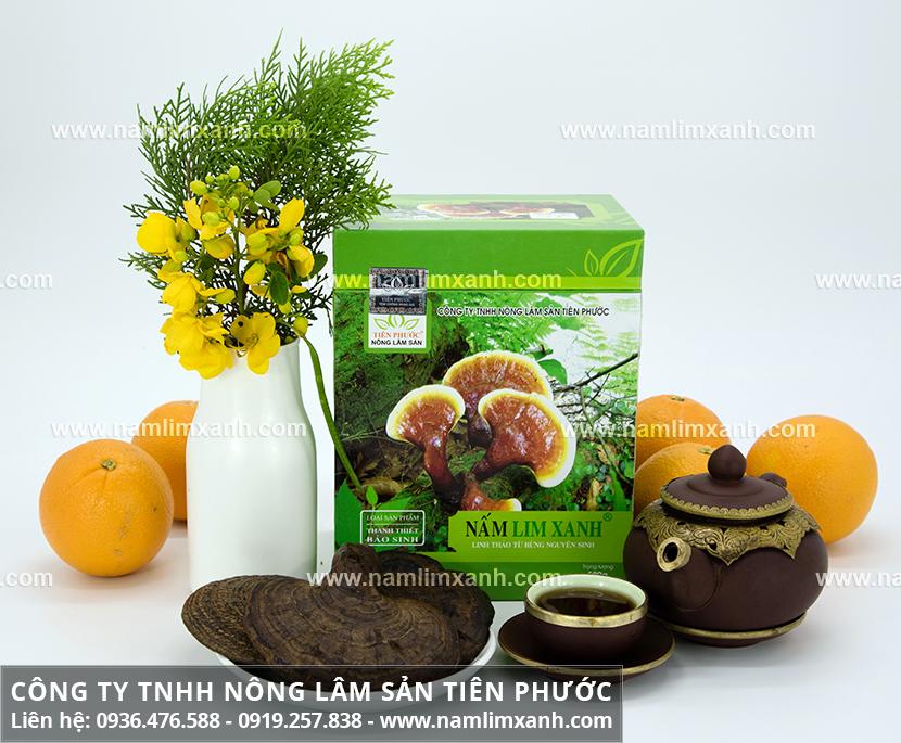 Công dụng nấm lim xanh Tiên Phước chữa ung thư gan uống nấm lim rừng