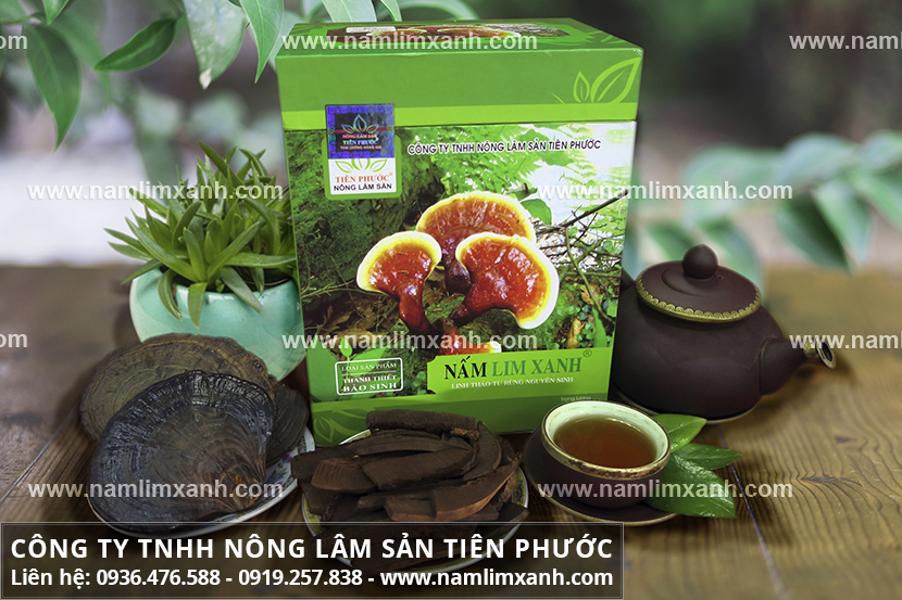 Tác dụng của nấm lim xanh chữa bệnh ung thư và công dụng nấm lim rừng