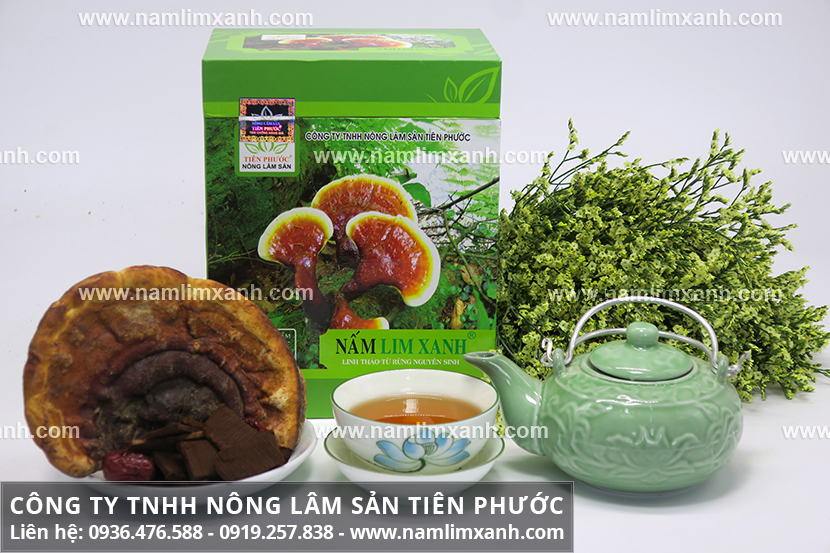 Địa chỉ bán nấm lim xanh ở Quảng Trị và tác dụng nấm lim xanh Việt Nam