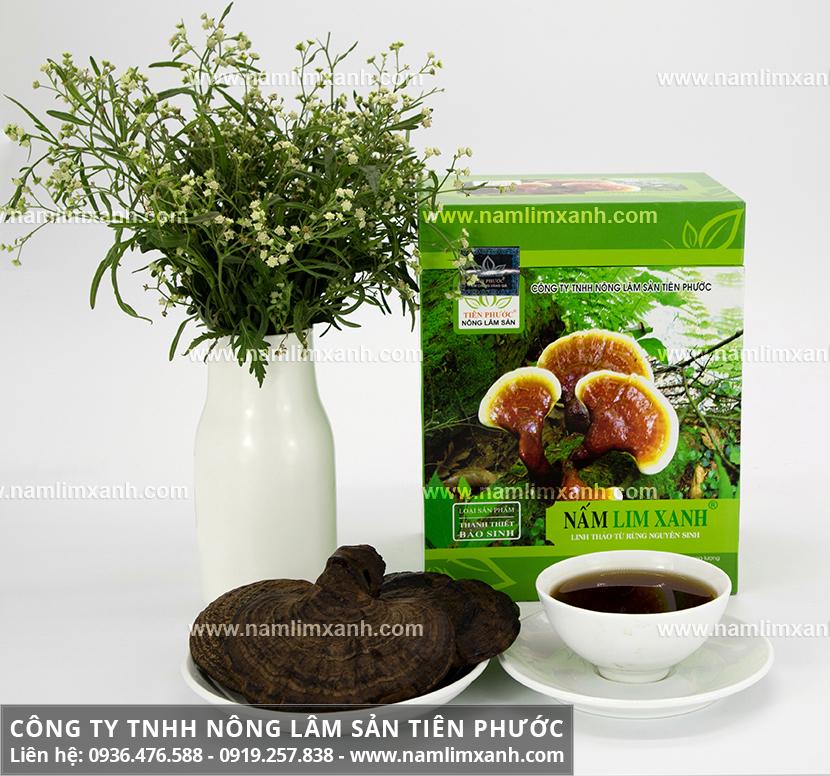 Giá bán nấm lim xanh Công ty Tiên Phước và phân biệt nấm lim thật giả