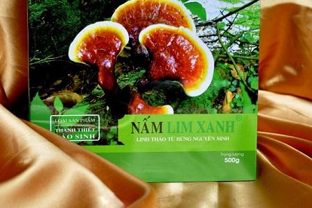 giá nấm lim xanh tự nhiên