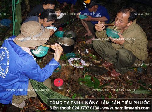 Bữa cơm thợ hái nấm lim xanh rừng Tiên Phước giữa rừng sâu